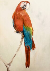 Parrot in acrylic by Ann Force